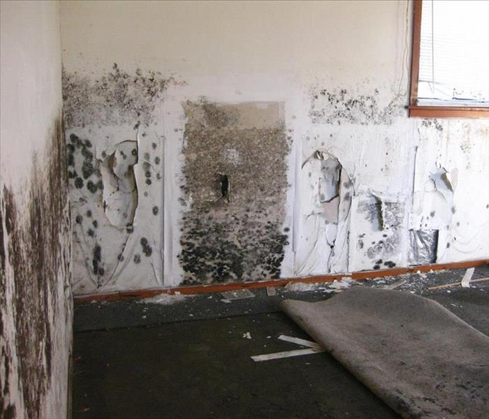 Mold Remediation Northbrook/Wheeling/Glencoe Residents:  Follow These Mold Safety Tips If You Suspect  Mold