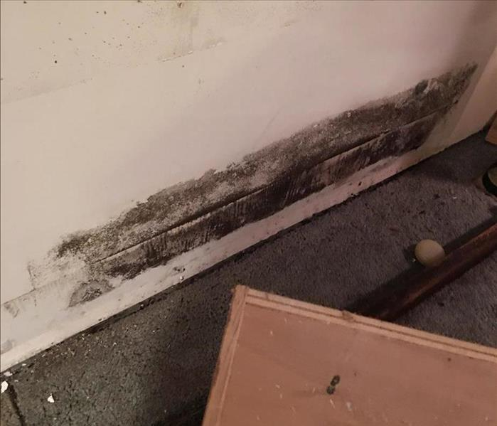 Mold Remediation Understanding your coverage for Mold in IL